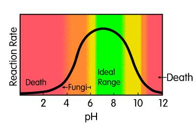 Diagram of how ph affects bacterial growth rates