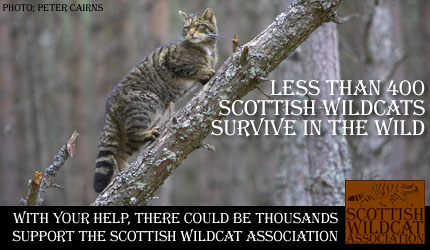 Scottish Wilslidw Association link
