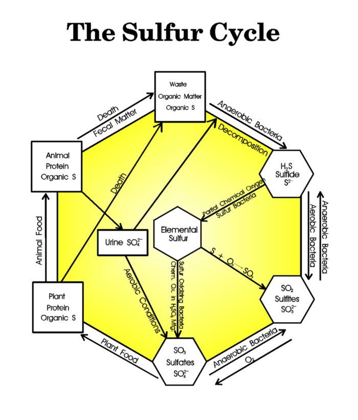 sulfur cycle diagram - page 6 of hydrogen sulfide treatise
